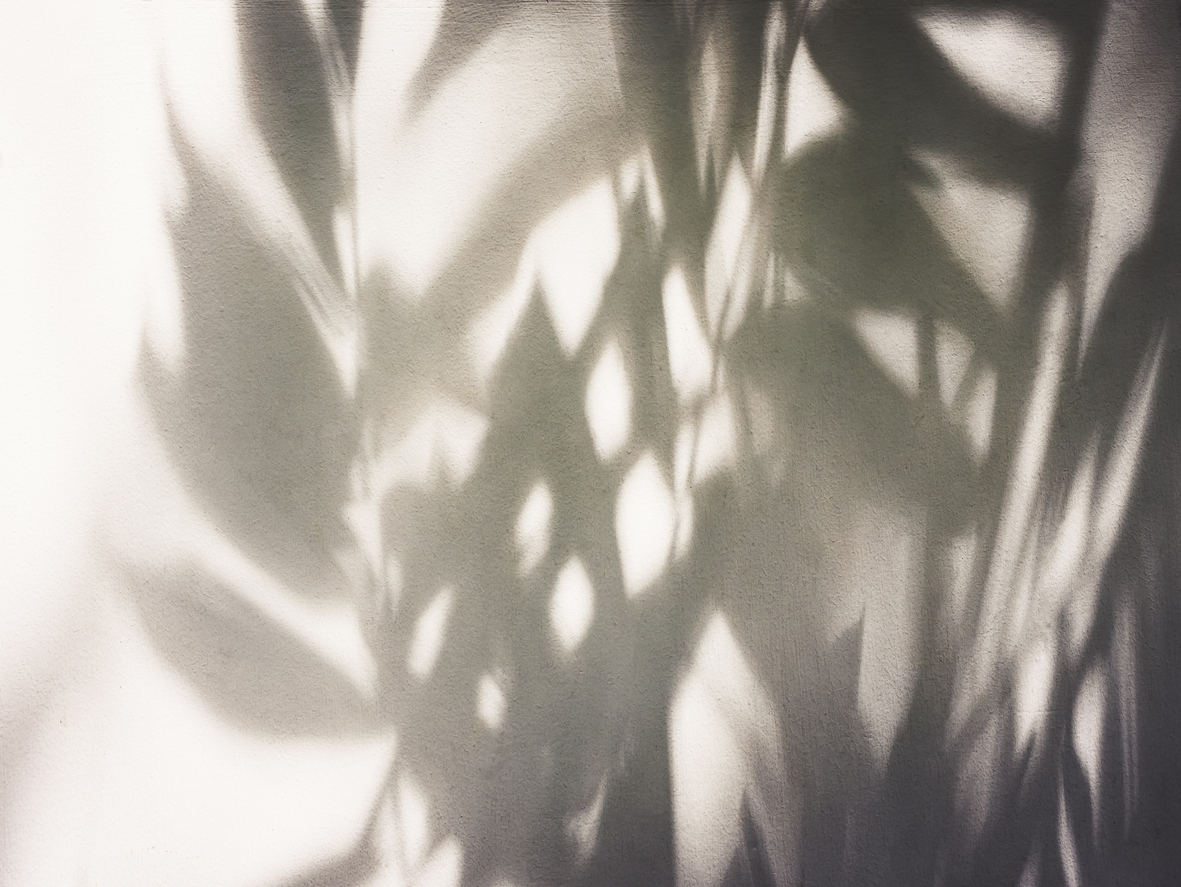 Shadow of tree leaves